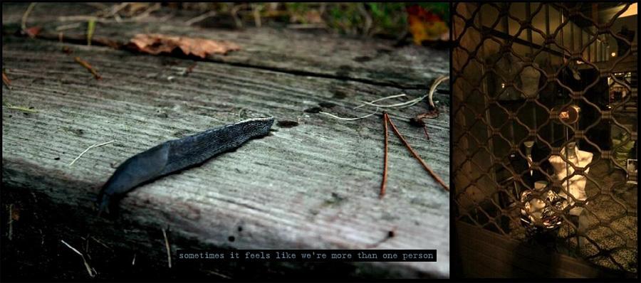 slug on wood and a shop